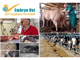 Embryo Vet